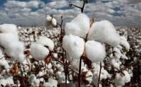 ICAC 11月份月报:中国进口棉花量大幅减少