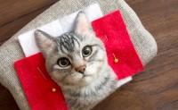 日本牛人用针和羊毛克隆出了一只猫