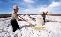 巴基斯坦取消棉花进口关税