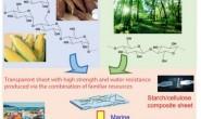 基于植物的新型塑料在海洋中具生物降解性
