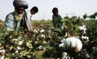 疫情不会给印度棉花出口带来明显影响