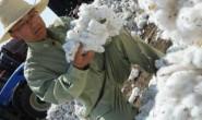 美农业部份预测棉花消费负面影响持续