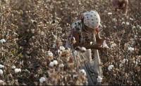 乌兹别克斯坦取消对棉花生产的管控