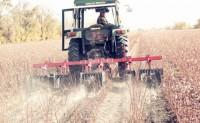 2020年全国植棉意向下降5.03%