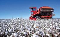 澳大利亚棉花成为受旱情影响最严重的产品