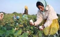 印度棉花消费大幅减少