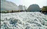 中国棉花市场活跃东南亚采购停滞