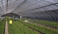 用功能化纱线织农用纺织品大棚可在雨中发电