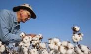 美国棉花出口销售暴跌