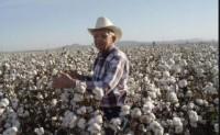 内外期棉价格上涨给市场带来希望