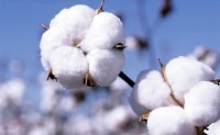 ICE期棉周三收跌报每磅64.96美分