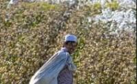 美国下月对新疆制裁全球时装商追踪棉花来源