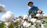 新疆棉禁令究竟有何潜在影响?