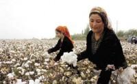 美国准备禁止进口新疆棉花的整个供应链产品