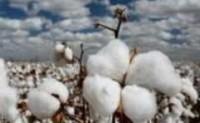 哈萨克斯坦棉花产业以出口为优先导向