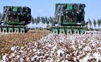 澳洲对中国终止订购澳棉有点手足无措