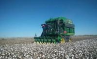 新疆自选培育的机采棉新品种亩产突破690公斤