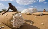 巴基斯坦棉花产量将再次错过官方设定目标
