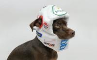 狗狗专用奢华睡眠头盔