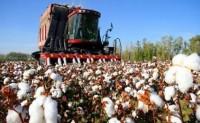 新疆棉花产业发展论坛上探讨新格局下经营策略