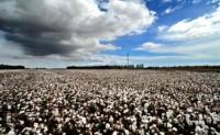 棉花需求可能开始增加