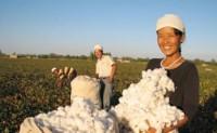 收储棉政策落地质量要求较去年放宽