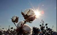 长期来看国际棉价仍将偏强运行