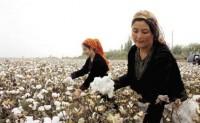 欧洲补刀抵制新疆棉对中国纺织业有多大冲击?