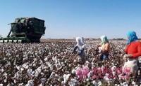 新疆棉花生产出现新面貌