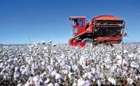 年度全球库存继续下降 棉花价格同比上涨