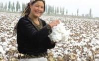 中棉集团2021年计划实现棉花经营量260万吨