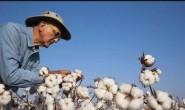 美国棉花价格上涨 出口需求转淡