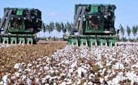 美国2020/21年度棉花收割面积预估持平单产为每英亩811磅