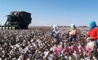 ICAC 月报:棉花库存继续下降消费复苏存变数