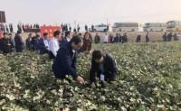 今年新疆 推动设立棉花棉纱交易中心