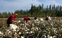 印度古邦植棉基本完成巴基斯坦棉价强势或难维系