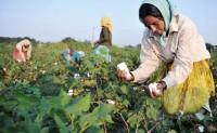 巴西马托格罗索州棉花创5年最差表现