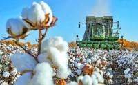 内外棉花价差扩大 纺企原料采购转向