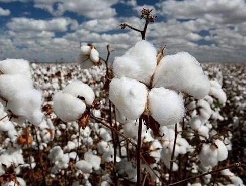 棉价取决于需求端的复苏情况