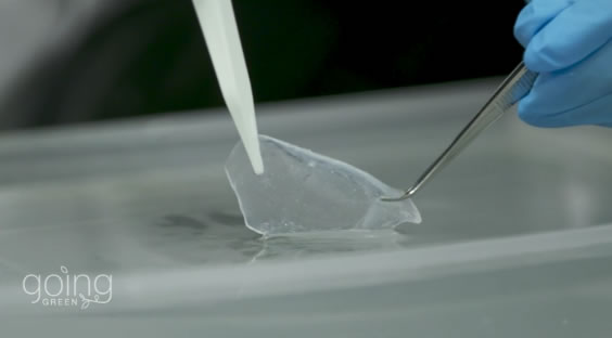 豆渣变环保袋替代塑料:一个月内自动降解