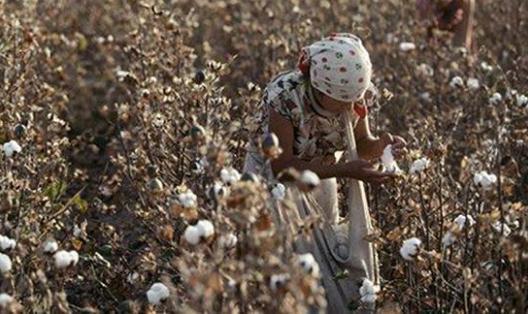 乌兹别克斯坦政府通过发展棉花和纺织品生产新措施
