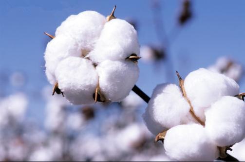 ICE棉花期货周四收高报每磅70.69美分