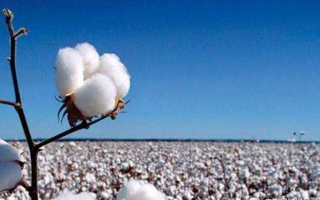 2月3日轮入新疆棉9000吨