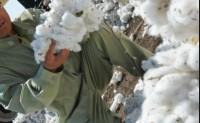 棉花短纤率和含杂率国家标准样品研制成功