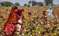 印度第二波疫情或将冲击棉花产业链
