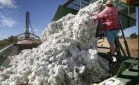 澳棉丰收没了中国市场能卖去哪?