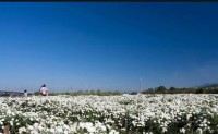 韩国农药企业破解巴基斯坦棉花虫害?