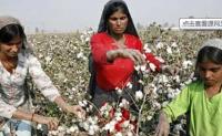 新年度开始印度棉花交易价格将高于政府支持价格