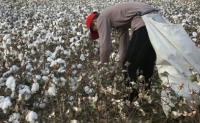 农发行将投放500亿元贷款支持新疆棉花收购