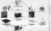蚕丝制备超折叠导电材料